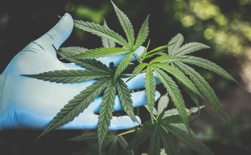 Varför Sverige borde omreglera sin Marijuana-politkik